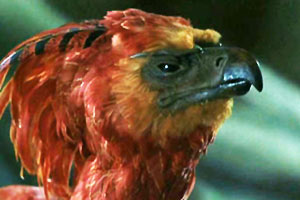 Fawkes the Phoenix